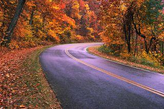 Fall trees road
