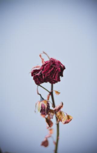 Beautiful-blur-bright-1440477