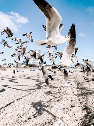 Flock-of-flying-gulls-above-shore-1974491
